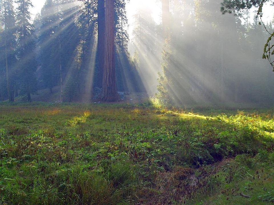 Bartlett-Tours-Group-Tours-yosemite-sequoia